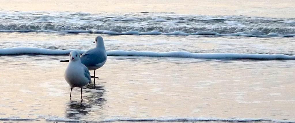 Deux mouettes à la plage